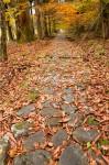 石畳に積もる落ち葉