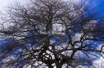 そびえる枯木