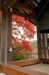 観音寺 鐘楼の額縁紅葉