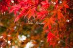 日光市内 浄光寺山門の紅葉