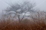 覚満淵 霧の湿原