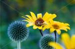 坊主頭と黄色い花