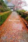 落葉の小道