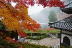 遊龍の松と紅葉2