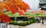 遊龍の松と紅葉1
