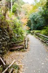 日向大神宮への小道
