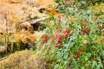 小道の紅葉