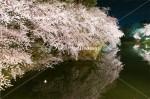中濠の夜桜