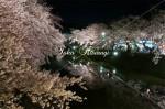 中濠と夜桜
