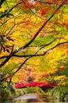 紅葉の錦繍