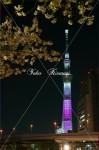夜桜と東京スカイ・ツリー
