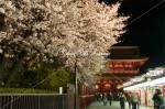浅草寺 参道の夜桜