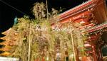 宝蔵門と枝垂れ桜