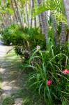 琉球村の植物