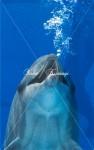 イルカの呼吸
