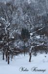 流れる枝と雪餅