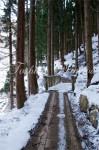 野猿公苑の林道