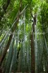 境内の竹林