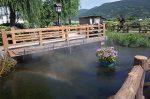 紫陽花池の幽玄